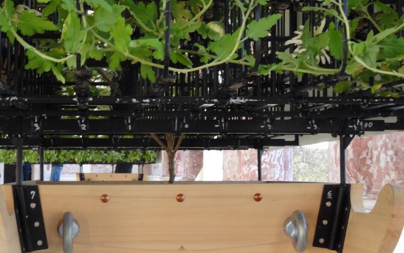 Versailles expose des chrysanthèmes japonais en 2014 Dsc01414