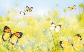 sousou et shirine Fleurs10