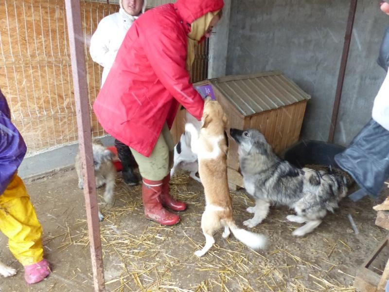 FANFAN, F-X, taille moyenne, née env. 2011 (ANDA) - Prise en charge Refuge de Jouvence 417