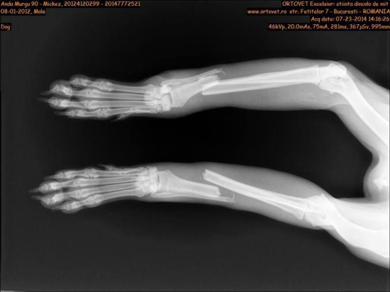 MIKI, mâle taille moyenne, blessé, né 2012 - (ANDA) Miki310