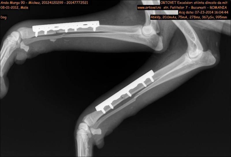 MIKI, mâle taille moyenne, blessé, né 2012 - (ANDA) Miki410