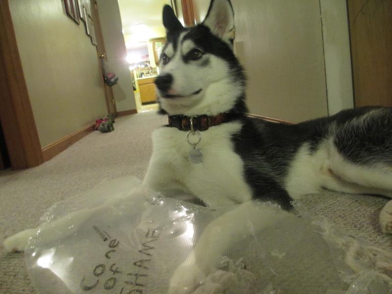HOTM Chat: November - Naughty Huskies 05410
