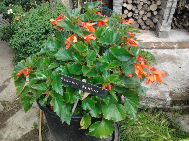 nouvelles photos de mes fleurs  Photo121