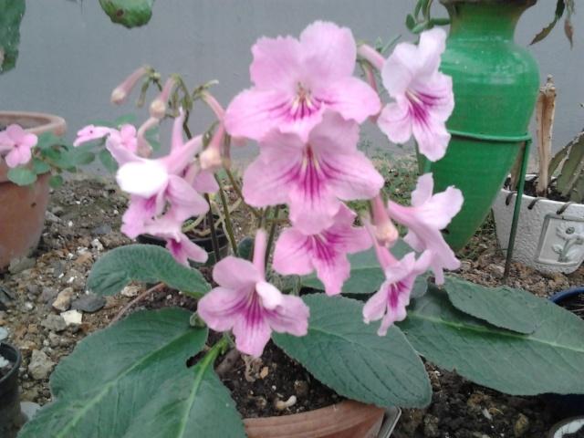 nouvelles photos de mes fleurs  Photo125
