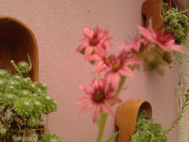 nouvelles photos de mes fleurs  Photo127