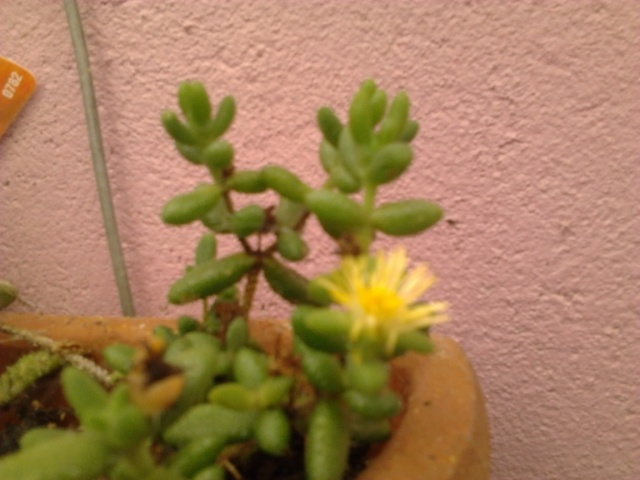 nouvelles photos de mes fleurs  Photo128