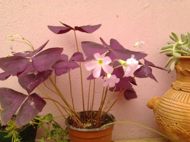 nouvelles photos de mes fleurs  Photo129