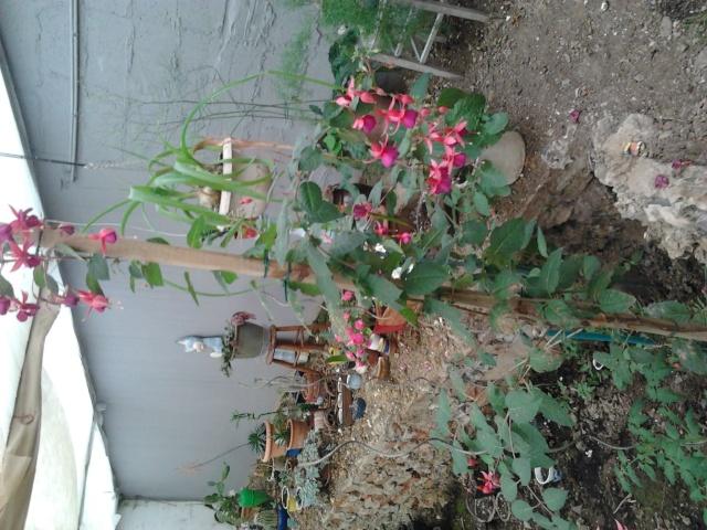 nouvelles photos de mes fleurs  Photo130