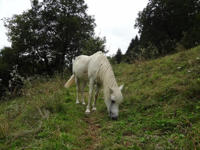 JONQUILLE - ONC poney née en 1982 - décédée avant son placement Jonqui11
