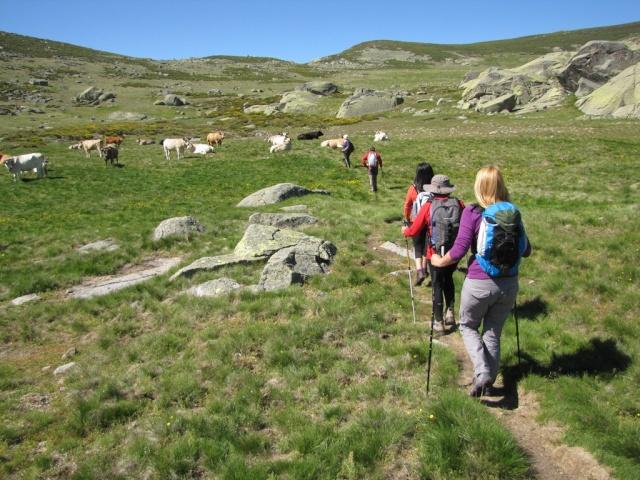 20130615 - GREDOS - Subida al MOREZÓN (2.389 m)  00954