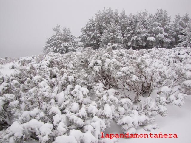 20131117 - IMPRESIONANTE NEVADA EN COTOS 01022
