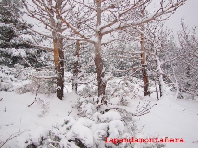 20131117 - IMPRESIONANTE NEVADA EN COTOS 01224