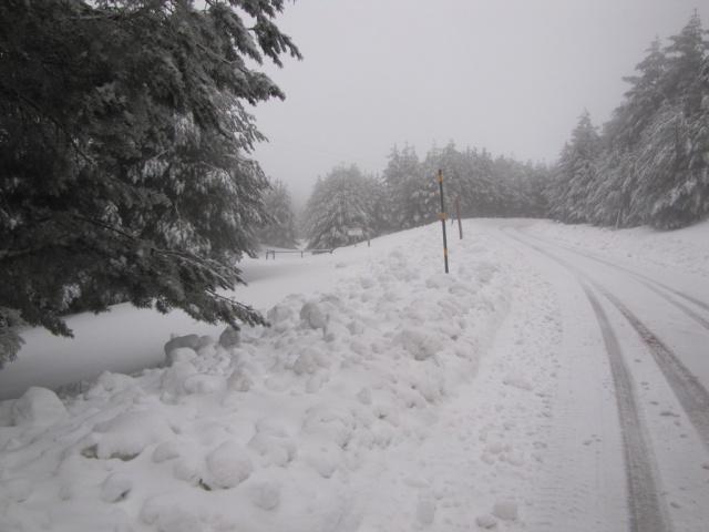 20130121 - UNA VUELTA POR COTOS (entre la niebla) 01742