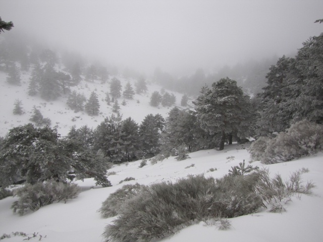 20130121 - UNA VUELTA POR COTOS (entre la niebla) 02129