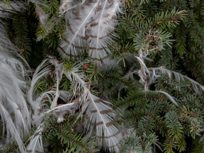 À qui les plumes ? 01062012