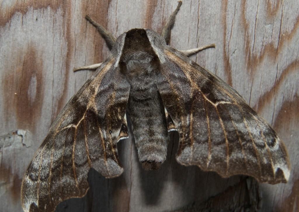 Quelques insectes 22062010