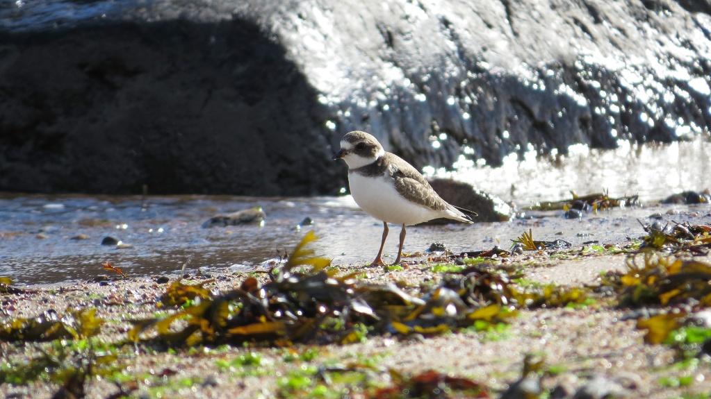 À la plage Sdfimg13