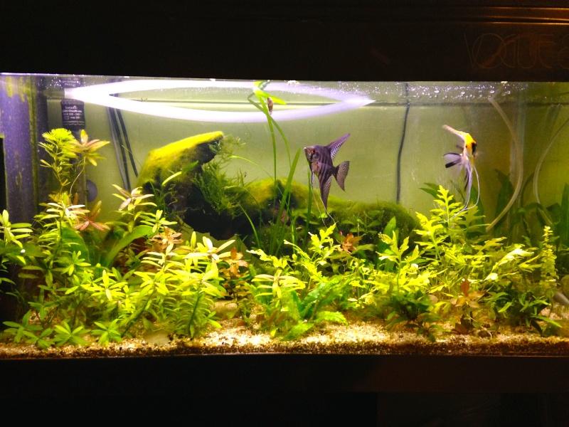 Changement de décor d'un aquarium déjà en route Img_0713