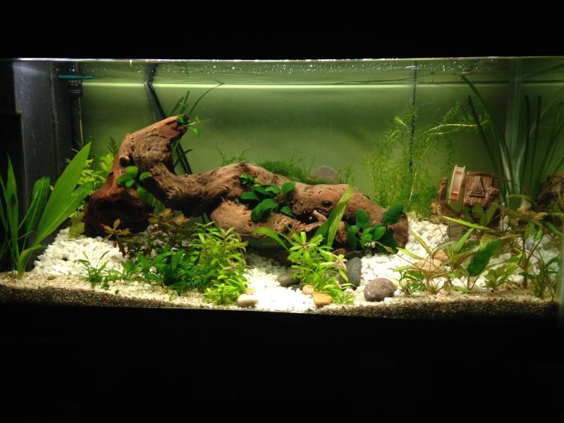 Changement de décor d'un aquarium déjà en route Img_1012