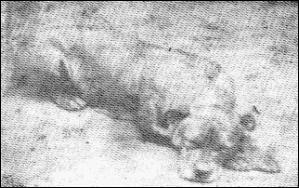 History's famous Dog Sallie10