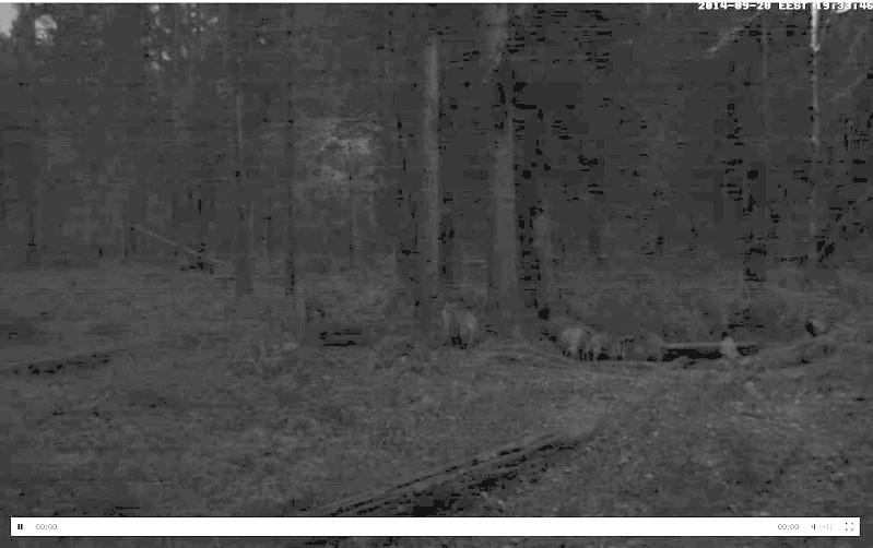 Wildtier-Livecams Heller10