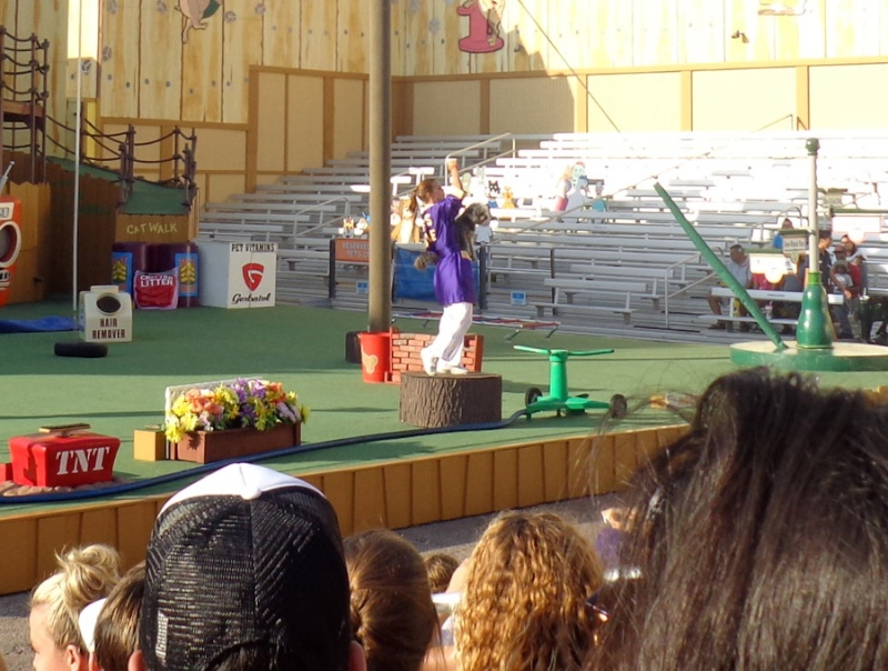 Notre inoubliable périple californien du 25 juin au 16 juillet 2013 (San Francisco, Yosemite, Los Angeles, Legoland, San Diego Zoo & SeaWorld et... DISNEYLAND!)  - Page 11 6813