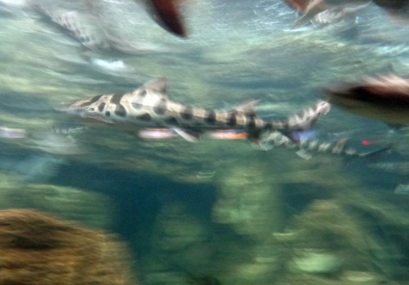 Notre inoubliable périple californien du 25 juin au 16 juillet 2013 (San Francisco, Yosemite, Los Angeles, Legoland, San Diego Zoo & SeaWorld et... DISNEYLAND!)  - Page 11 7711