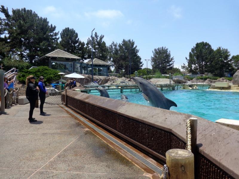 Notre inoubliable périple californien du 25 juin au 16 juillet 2013 (San Francisco, Yosemite, Los Angeles, Legoland, San Diego Zoo & SeaWorld et... DISNEYLAND!)  - Page 11 8311