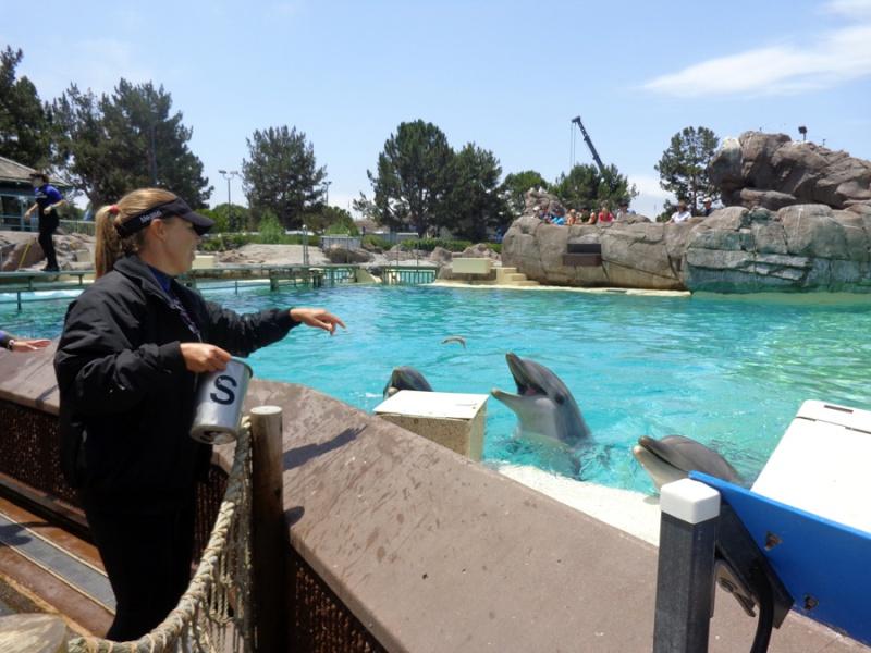 Notre inoubliable périple californien du 25 juin au 16 juillet 2013 (San Francisco, Yosemite, Los Angeles, Legoland, San Diego Zoo & SeaWorld et... DISNEYLAND!)  - Page 11 8411