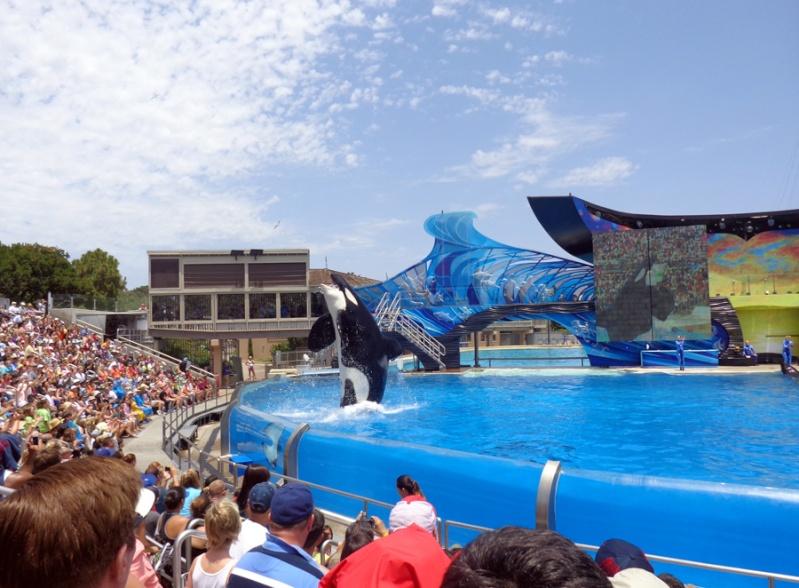 Notre inoubliable périple californien du 25 juin au 16 juillet 2013 (San Francisco, Yosemite, Los Angeles, Legoland, San Diego Zoo & SeaWorld et... DISNEYLAND!)  - Page 11 9111