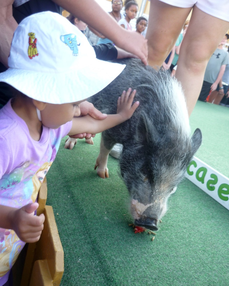 Notre inoubliable périple californien du 25 juin au 16 juillet 2013 (San Francisco, Yosemite, Los Angeles, Legoland, San Diego Zoo & SeaWorld et... DISNEYLAND!)  - Page 11 9312