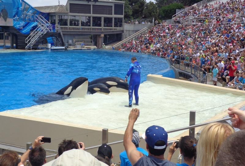 Notre inoubliable périple californien du 25 juin au 16 juillet 2013 (San Francisco, Yosemite, Los Angeles, Legoland, San Diego Zoo & SeaWorld et... DISNEYLAND!)  - Page 11 9411