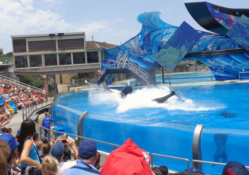 Notre inoubliable périple californien du 25 juin au 16 juillet 2013 (San Francisco, Yosemite, Los Angeles, Legoland, San Diego Zoo & SeaWorld et... DISNEYLAND!)  - Page 11 9511