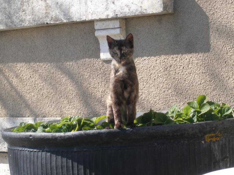 des nouvelles de Iroise et Ernest Cats_d12