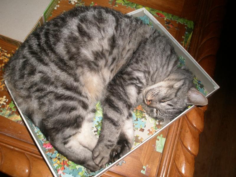 des nouvelles de Iroise et Ernest Cats_n11