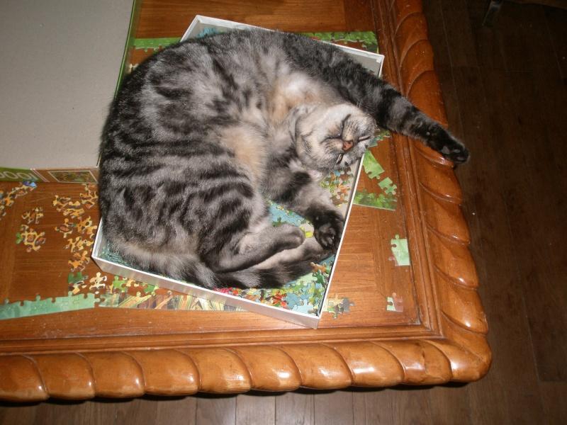 des nouvelles de Iroise et Ernest Cats_n12