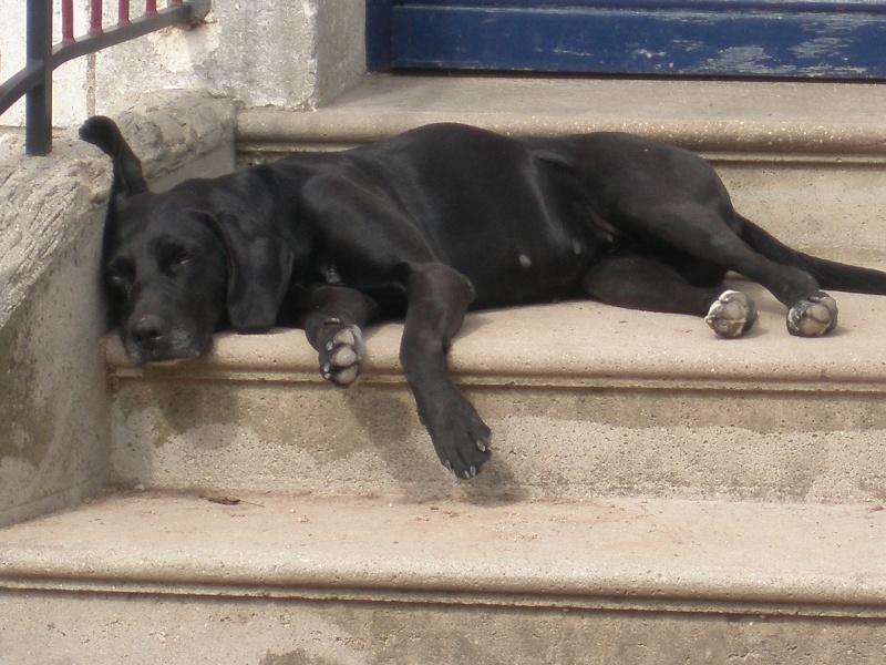 Nouvelles de Rica Pets_a10