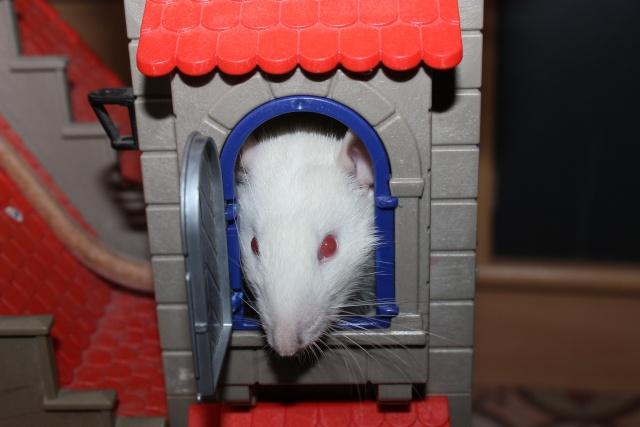 Recherche un rat sur Montpellier Img_1523