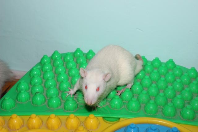 Recherche un rat sur Montpellier Img_1524
