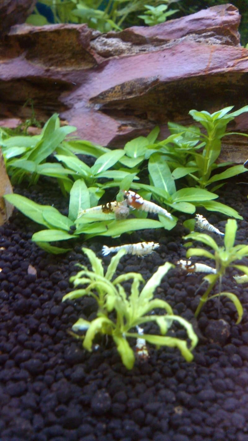 Gozgull Shrimp's - Page 7 Img_2048