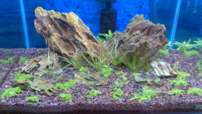 lancement 2 bacs Scaper Tank en IWAGUMI - Page 2 Img_2056