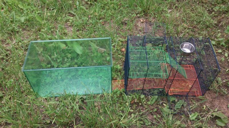 Vend cage Savic Habitat Dsc_1815