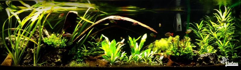 300L d'Amazonie + 30L sakura orange 300l10
