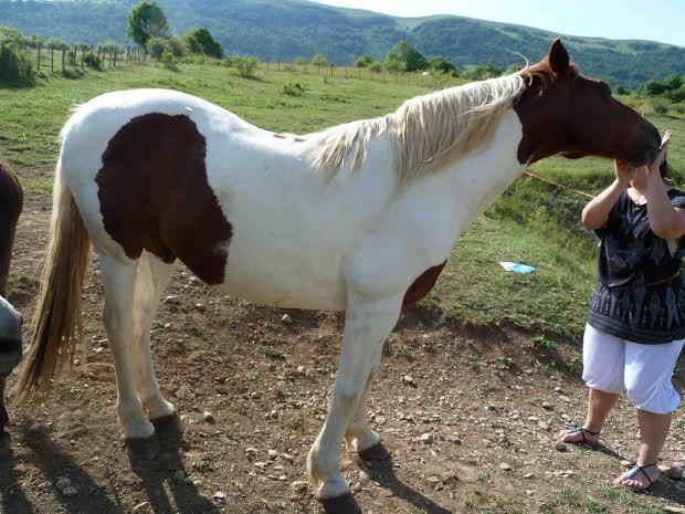CALINOU  - ONC poney - né en 1999 - adopté en novembre 2012 par Stéphanie - Page 6 1213