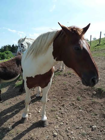 CALINOU  - ONC poney - né en 1999 - adopté en novembre 2012 par Stéphanie - Page 6 1612