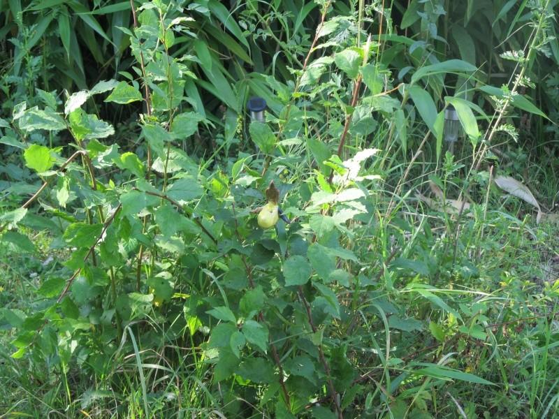 Un sabot dans mon jardin! Img_8025