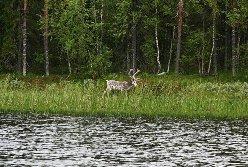 Séjour Suède et blog : Fishing Aventures  Alban_15