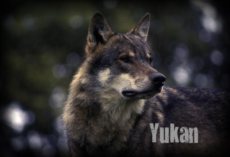 Yukan Yukan13
