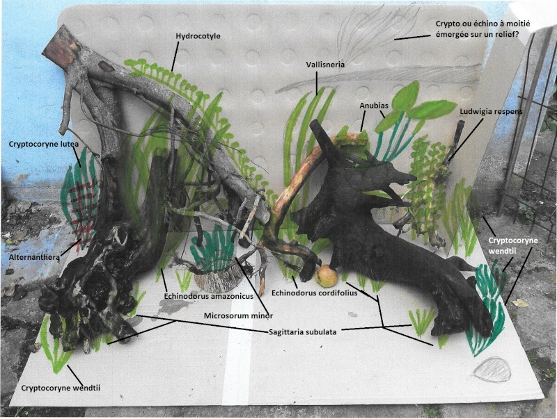 Mon projet de riparium amazonien - Page 2 Simula10