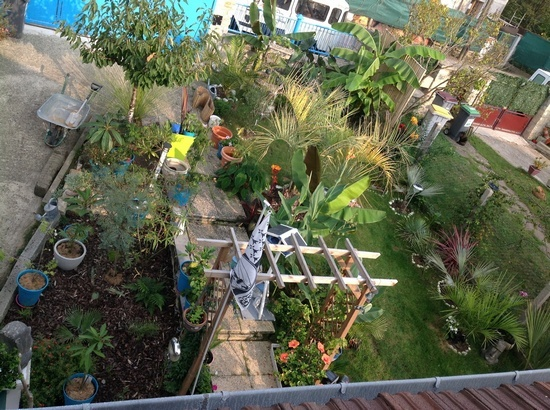 Mon jeune jardin a Auvers beach - Page 2 Image410